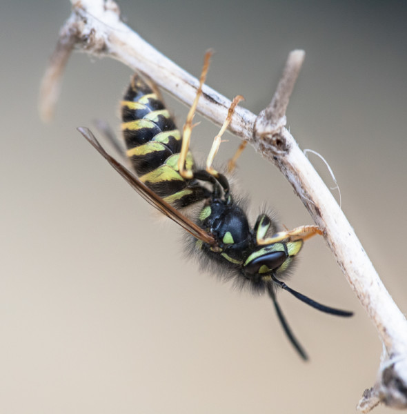 Macro Bilder Bee Fotograf