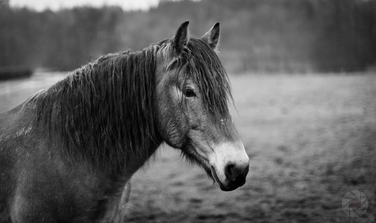Horse Series N.01